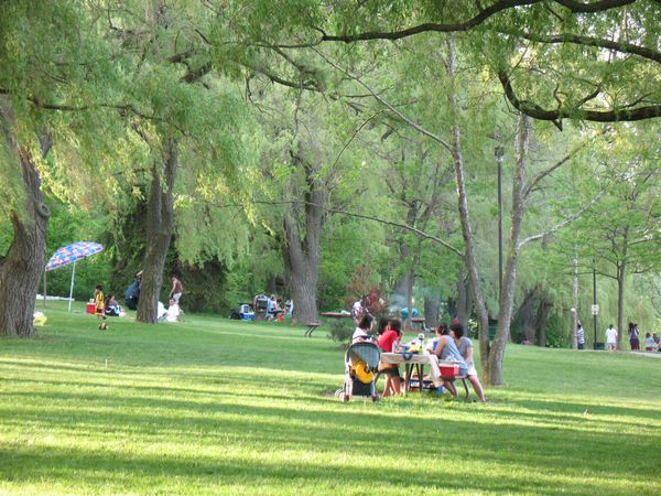 Picnic areas at Jack Darling park